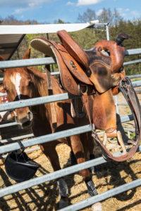 Cowboy saddle and horse